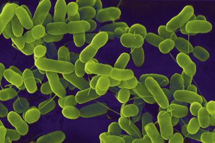 Ecoli into Biofuel