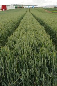 biofuel_plants