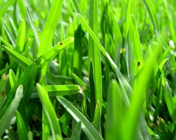 Grass cuttings to be turned into Biofuel