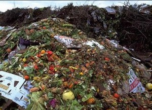 Biofuel from plant and food waste