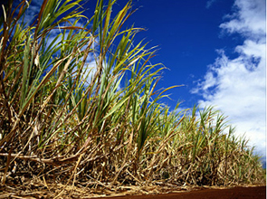 Biofuel production begins to have impact on Angolan econom