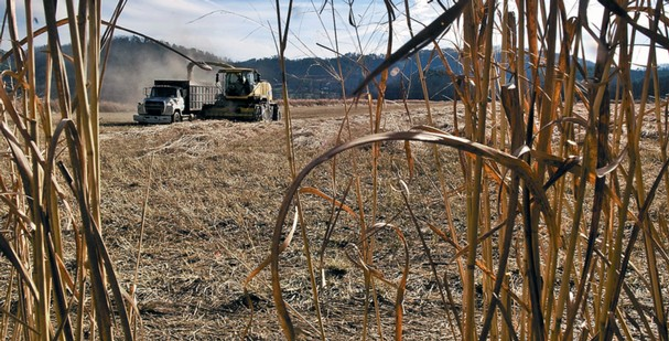 Farmers finding gamble on biofuel crop paying off make biofuel - Small farming ideas that pay off ...