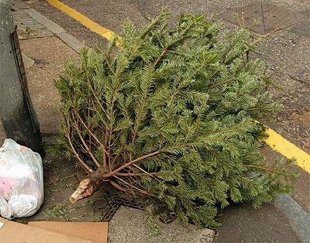 San Francisco's Christmas trees to become biofuel - Make Biofuel