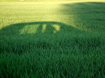 car shadow in field