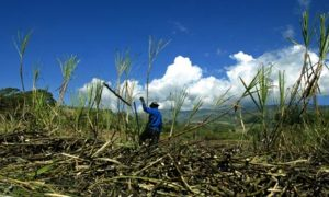 Biofuel land grab