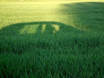 car shadow in field